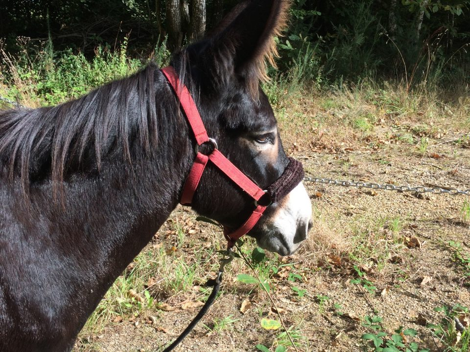 Bella Aux ânes etc